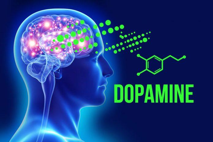 brain laminine